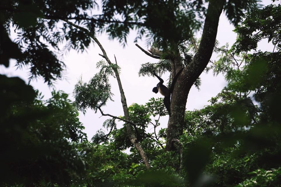 Travel Blog Series Reserva Atitlan Panajachel, Guatemala